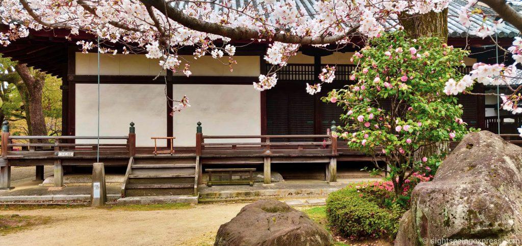 Japanese house, cherry blossom trees and dark rock
